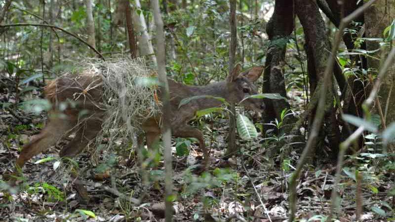 Animais silvestres apreendidos em operações policiais são soltos em reserva particular no litoral norte da Bahia