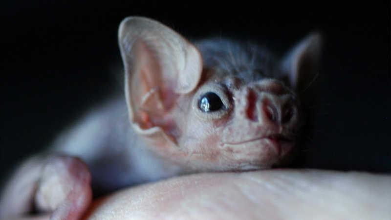 Inscrições abertas para nova edição do curso 'Uma introdução ao debate sobre a consideração moral dos animais não humanos'