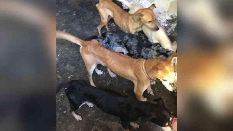 Sete cães e uma iguana são resgatados pela Polícia Civil com sinais de maus-tratos em Fortaleza; tutor é preso