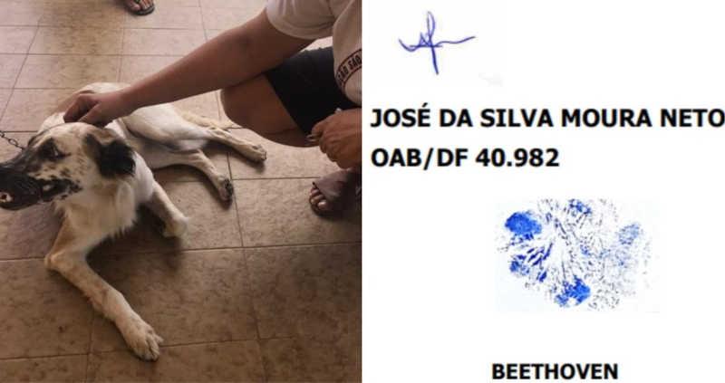 Cachorro Bethoven, que move processo contra agressor, assinou a ação judicial com a própria pata. — Foto: Divulgação