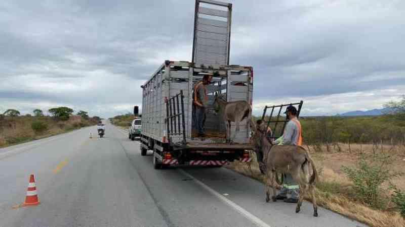 Mais de 2 mil animais são recolhidos das estradas cearenses no começo de 2021