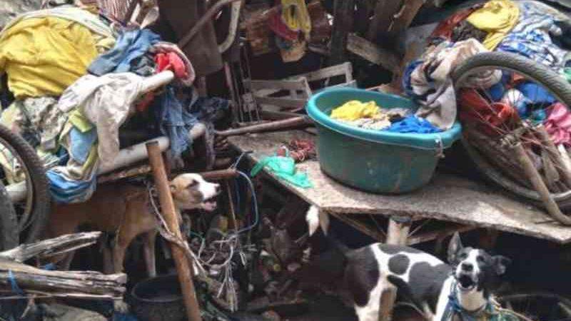 Cães em situação de maus-tratos são resgatados por policiais em Juazeiro do Norte, CE