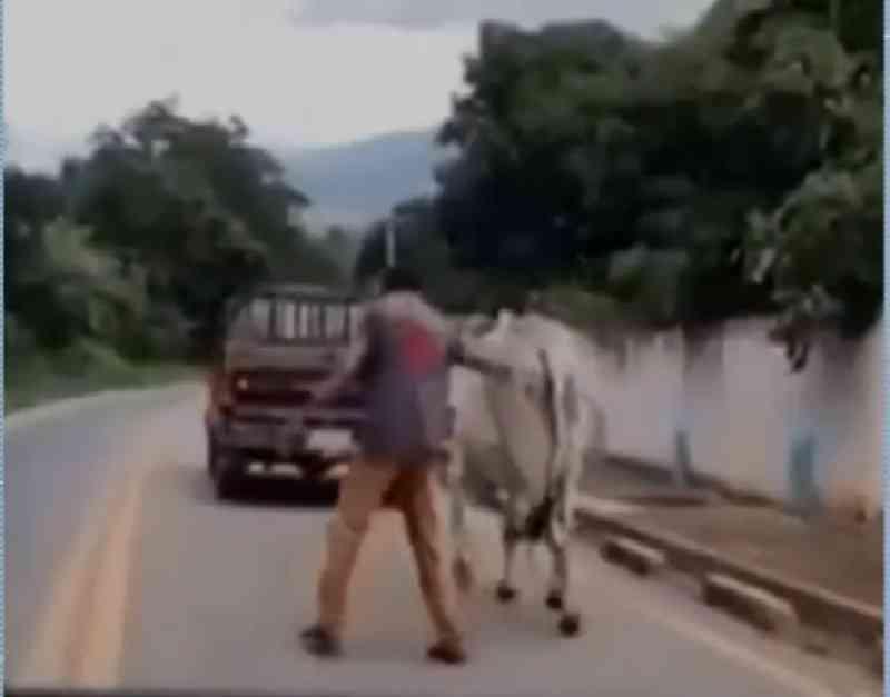 Motorista flagra homem arrastando boi com corda amarrada em caminhonete no Ceará