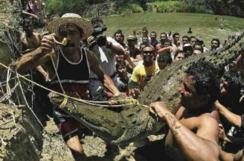 Apesar da proibição, moradores da Costa Rica realizaram 'lagarteada' e polícia resgata o crocodilo