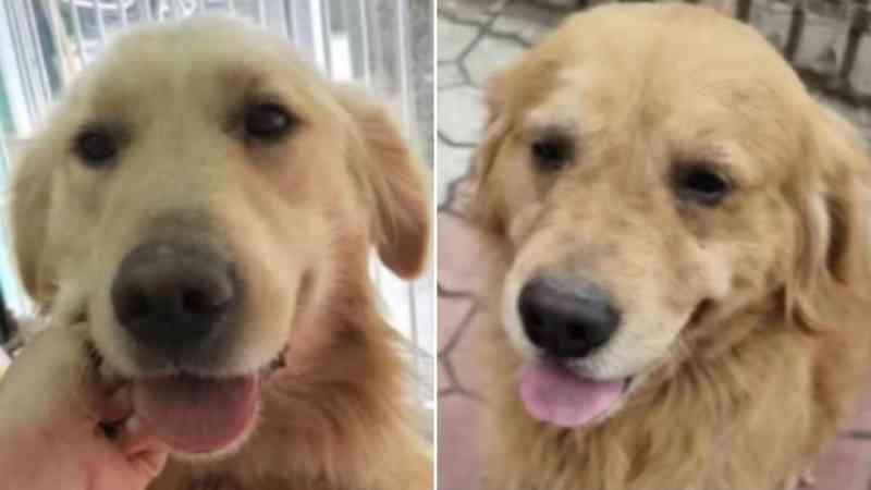 4 cães salvos de serem abatidos pela carne na China chegaram aos seus novos lares