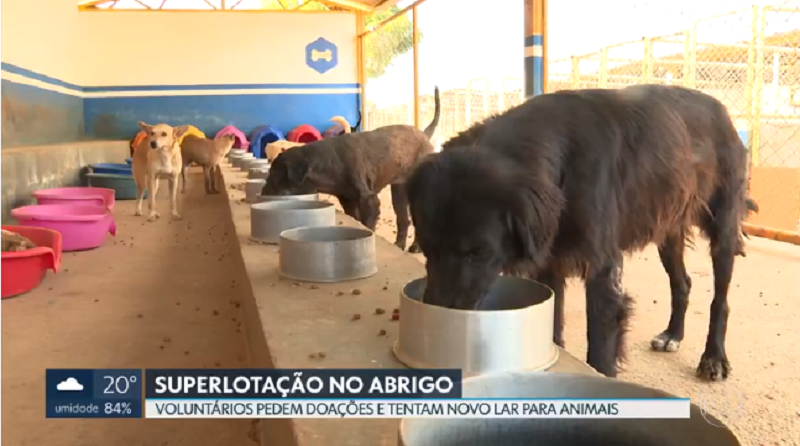 Voluntários pedem ajuda para abrigo superlotado de animais no Gama, no DF; veja como colaborar