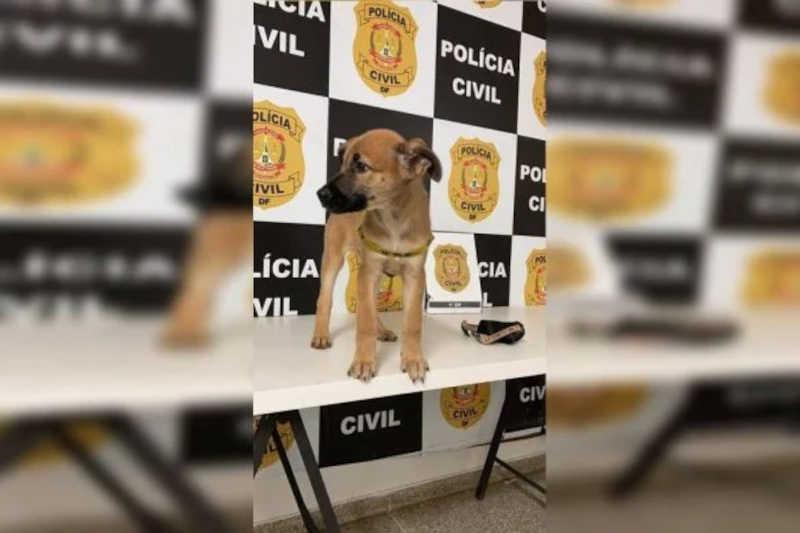 Vídeo: PCDF resgata filhote de cachorro criado em gaiola na Asa Sul, em Brasília