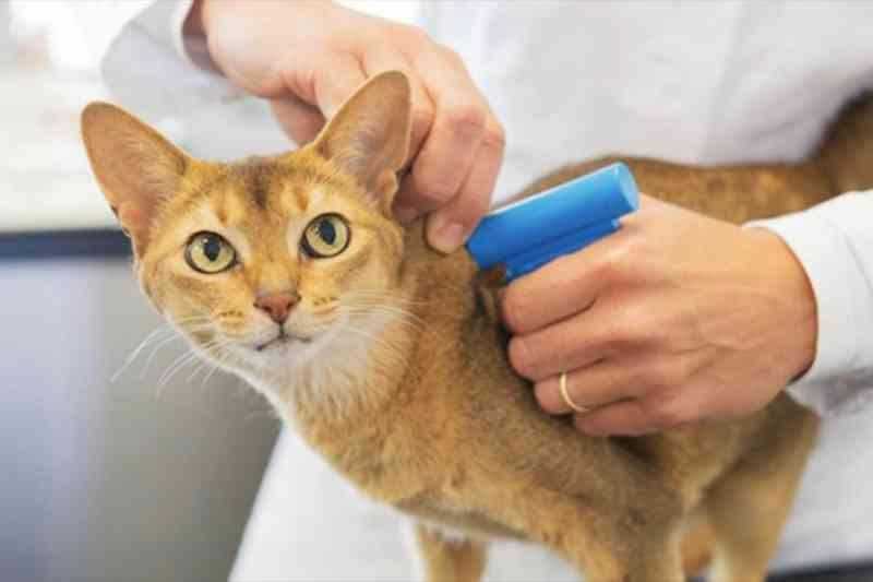 Microchip de identificação pode se tornar obrigatório para cães e gatos do DF