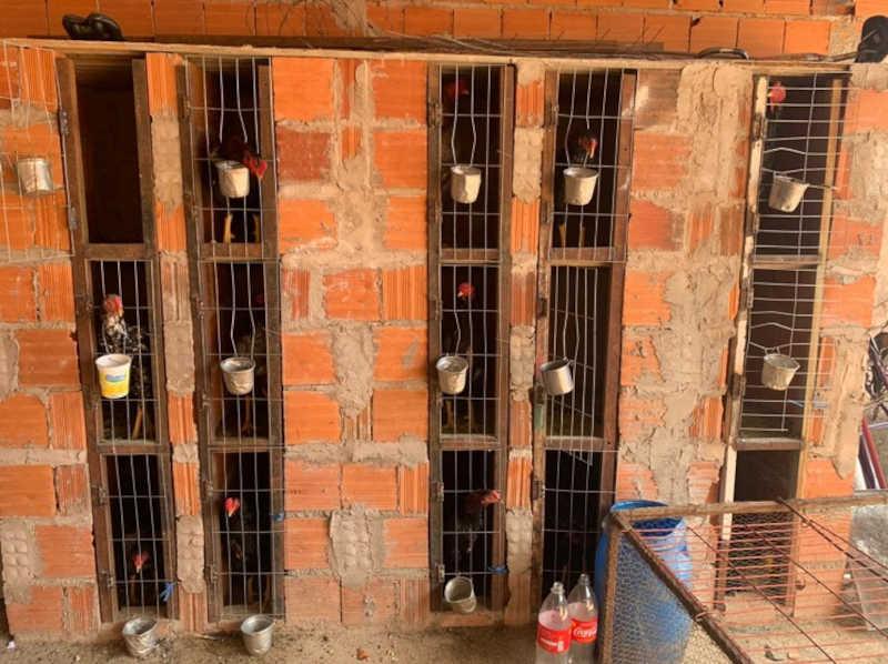Polícia Militar encontra local usado como rinha em Planaltina, DF