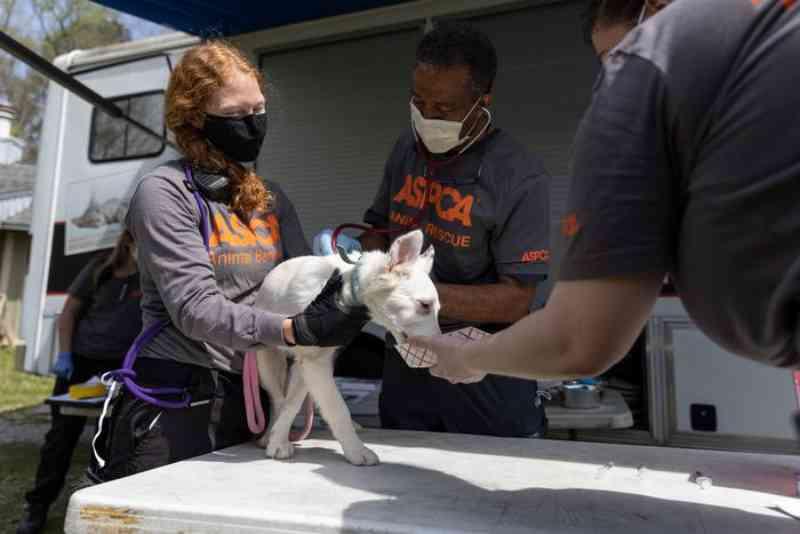 Resgatados 30 cães que viviam em 'condições imundas e de superlotação' no Alabama, EUA