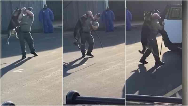 Policial dos EUA é filmado agredindo seu próprio 'cão policial' e pede demissão antes de ser exonerado
