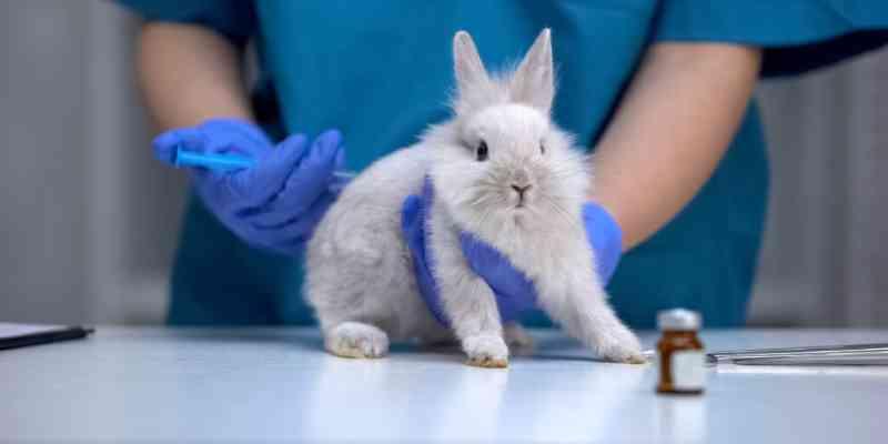 Maryland será o próximo estado dos EUA a proibir cosméticos testados em animais