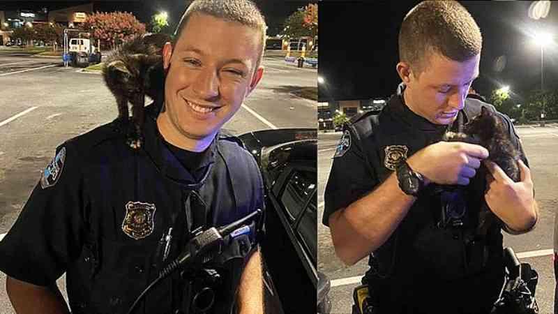 Após ser arremessado de carro em movimento, gato é adotado pelo policial que o salvou