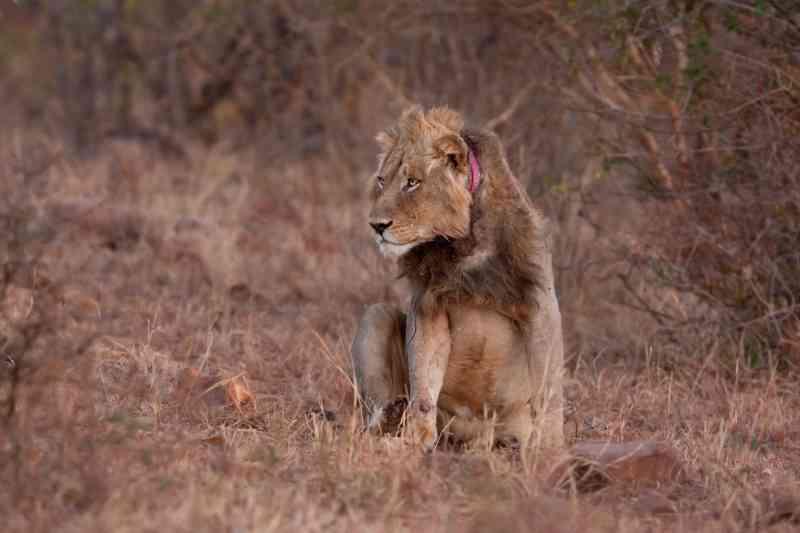 Tribunal nos EUA determina divulgação de dados sobre comércio de animais selvagens e importação de troféus de caça
