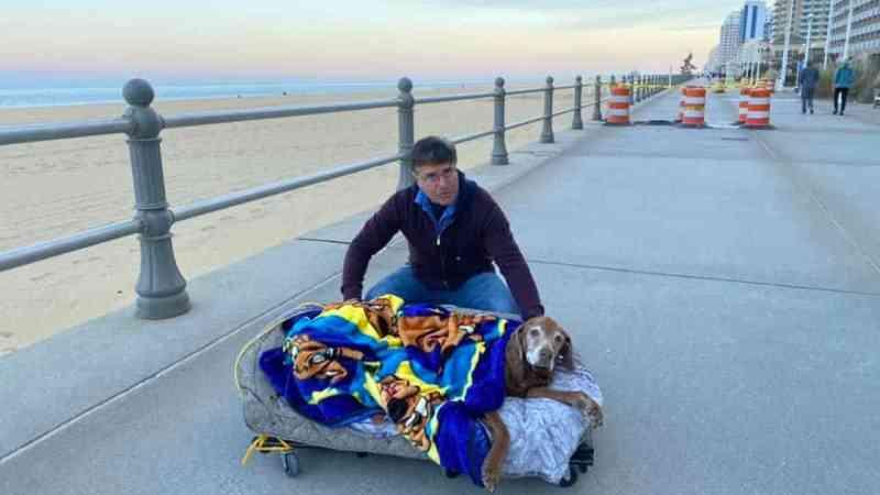 Amor incondicional: tutores criam cama móvel para levar cadela a passear
