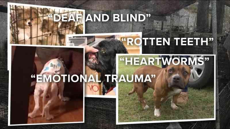 Grupos de resgate gastam mais de 1 milhão de dólares para ajudar animais abandonados e abusados