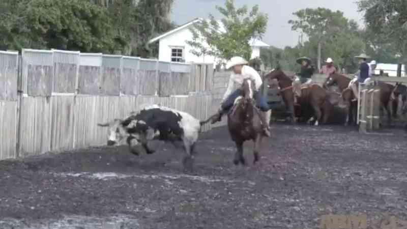 Ativistas gravam secretamente vídeo de tortura de animais em 'vaquejada' nos EUA