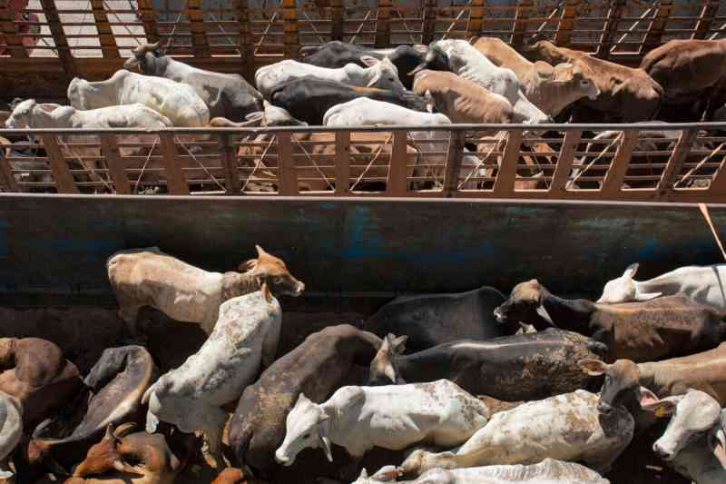 Crise no Canal de Suez deve causar a morte de 200 mil animais mesmo após desencalhe do navio