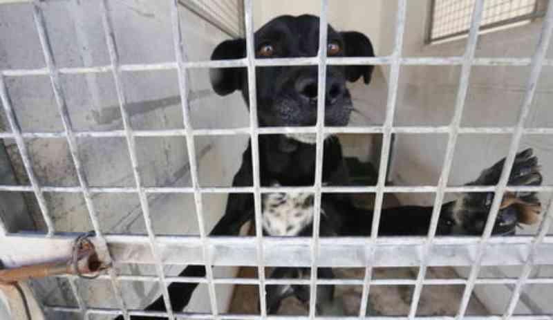 Nova lei do governo espanhol não considerará a raça para classificar cães como perigosos