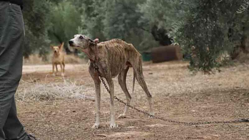 Parlamentares europeus alertam sobre maus-tratos e abandono dos cães usados em caça na Espanha