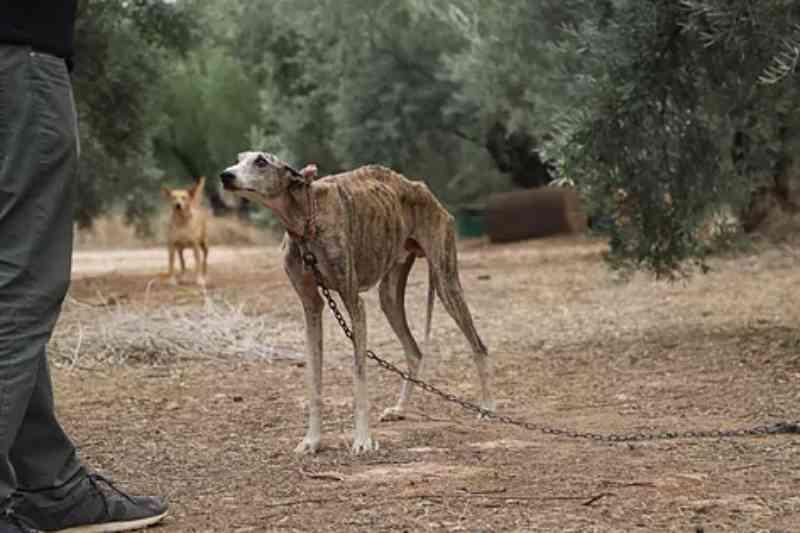 Parlamentares europeus alertam sobre maus-tratos e abandono dos cães usados em caçadas na Espanha