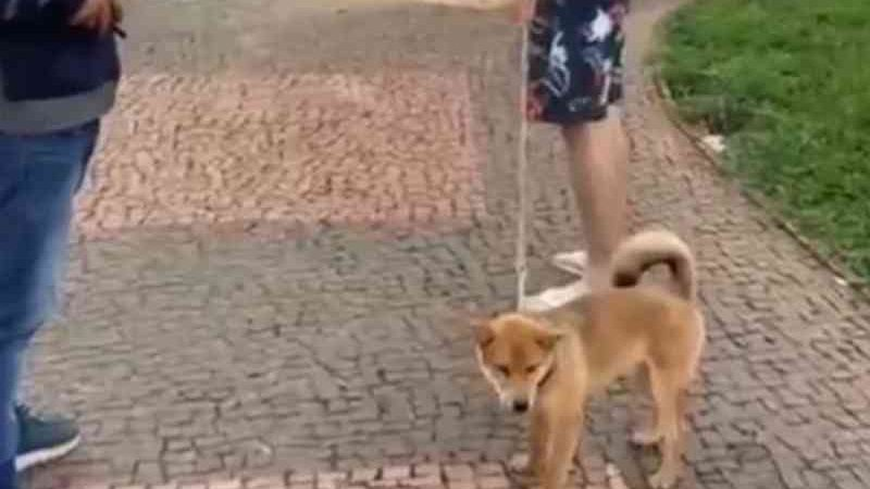 Moradora reage com indignação ao ver cão com coleira que dá choque em Goiânia; vídeo