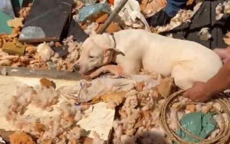 ONGs de Goiânia (GO) resgatam cães, gatos e peixe trancados em casa desocupada