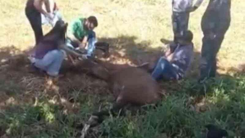 Cavalo é operado no meio de rua após ser atingido por carro em Jataí, GO; vídeo