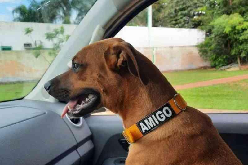 Cadela espera tutor por dois meses na porta de hospital, em Goiás