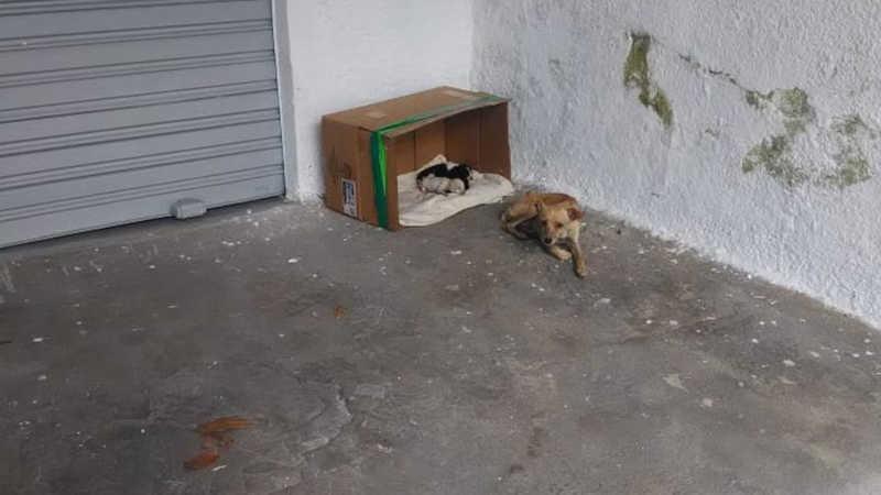 Homem abandona cachorros, mas animais são resgatados em um dia, em Goiânia
