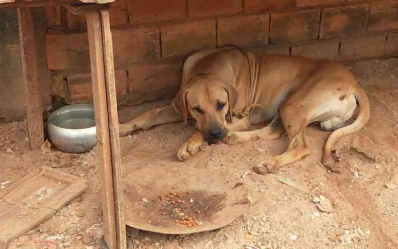 Jovem é preso suspeito de agredir o próprio cachorro com mangueira após animal fugir de casa, em Ipameri, GO; vídeo