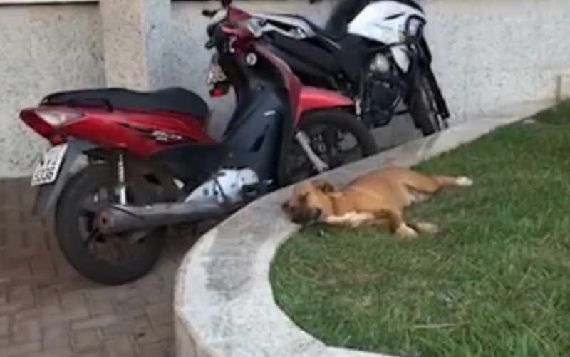 Cadela espera mais de 1 mês em porta de hospital por tutor que morreu de Covid-19 e é adotada em Nerópolis, GO, diz funcionária