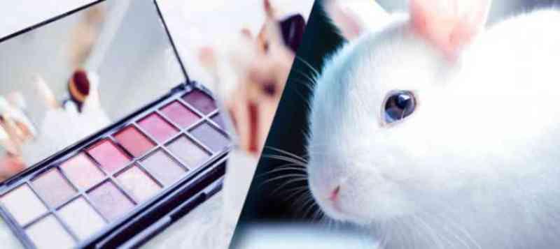 Projeto de Lei proíbe testes de cosméticos em animais no estado de Goiás
