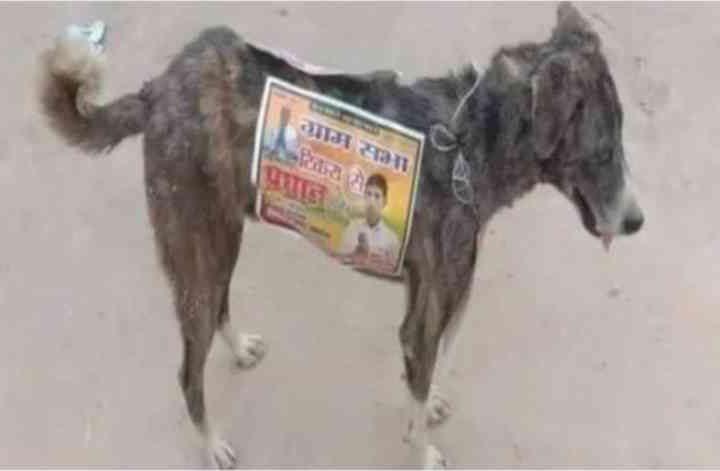 Candidatos usam até cachorros de rua em suas campanhas políticas e imagem revolta o mundo