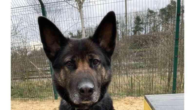 Cadela que sobreviveu após ser amarrada a pedras e atirada ao rio já tem novo lar