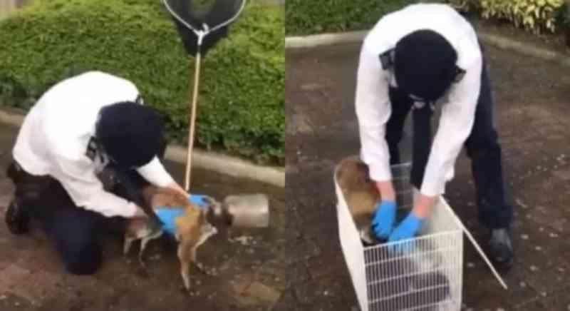 Raposa é encontrada com garrafa plástica presa na cabeça; veja vídeo