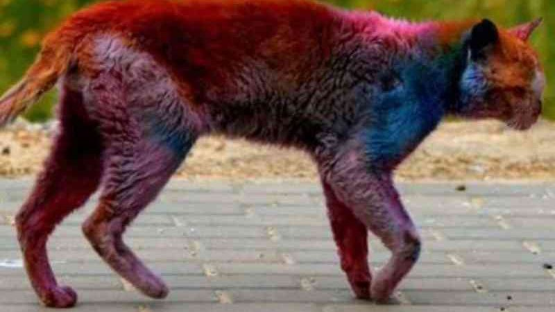Gato multicolorido aparece em Israel; lixo químico ou maus-tratos?