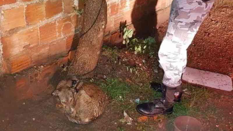 Polícia Militar resgata cachorro amarrado em rua de Açailândia, MA