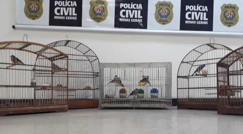 Homem é preso por tráfico de animais exóticos em Belo Horizonte, MG