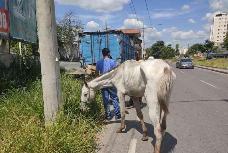Homem que afirmou ter matado égua com machado é preso em Betim, MG