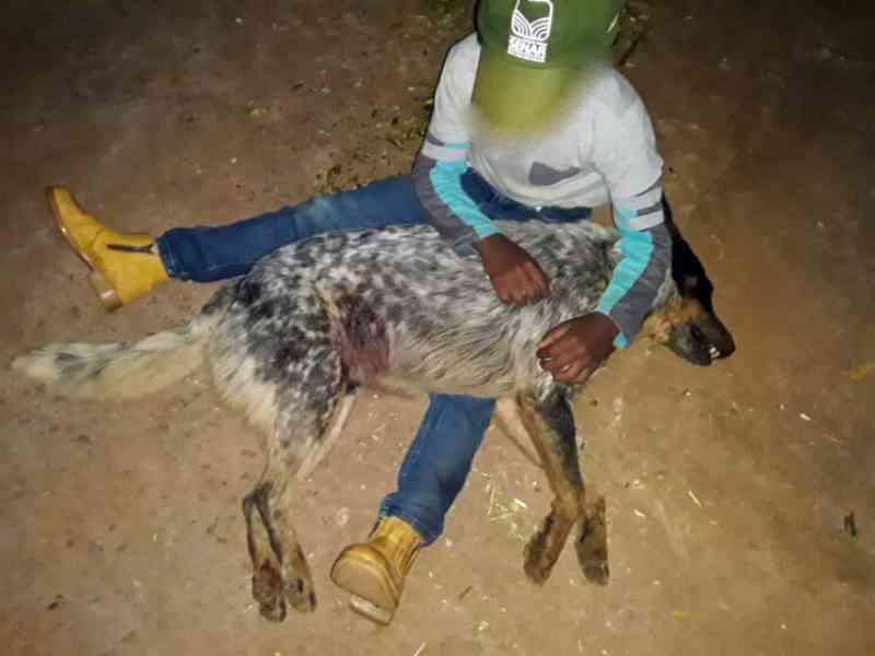 Homem é acusado de matar a tiro cachorro de criança em Itabira, MG