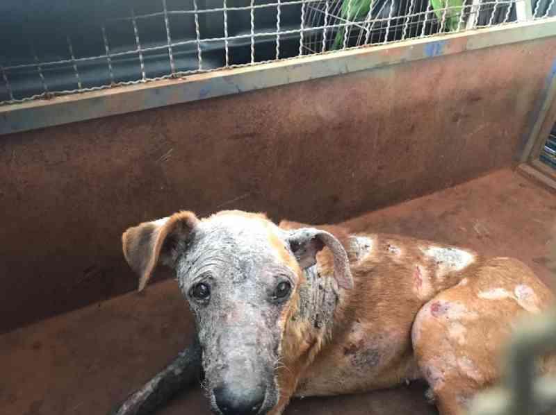Cãozinho vítima de maus-tratos morre em Ituiutaba, MG