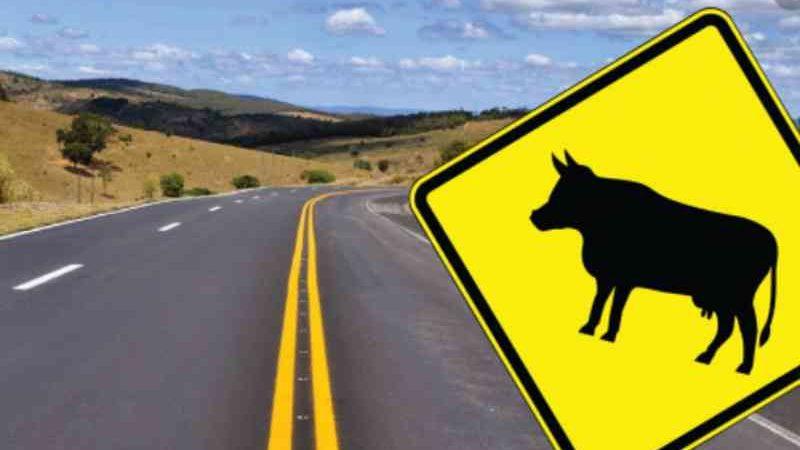 Câmara de Mariana (MG) aprova lei que obriga cidadãos a socorrerem animais em vias públicas