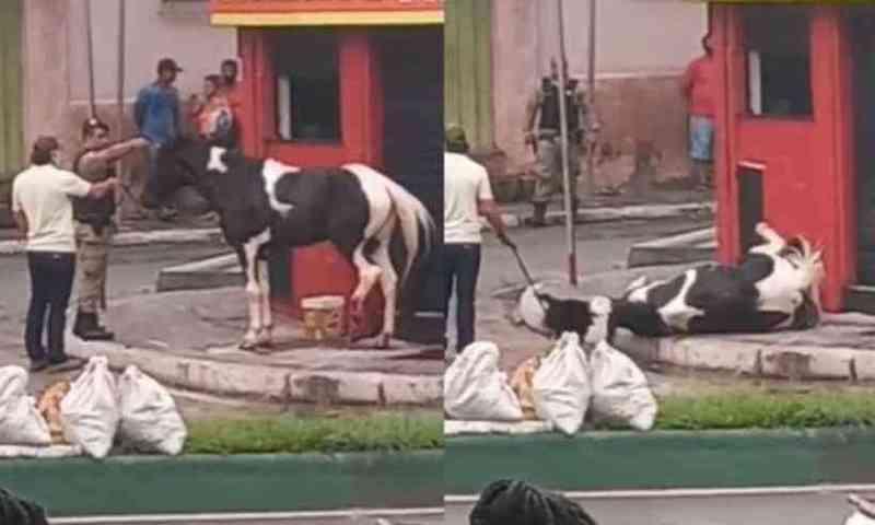 Policial militar mata cavalo e gera revolta nas redes sociais