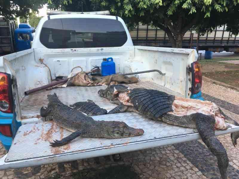 Polícia Militar Ambiental de Bonito (MS) apreende dois jacarés e um javali abatidos em leito de córrego no município