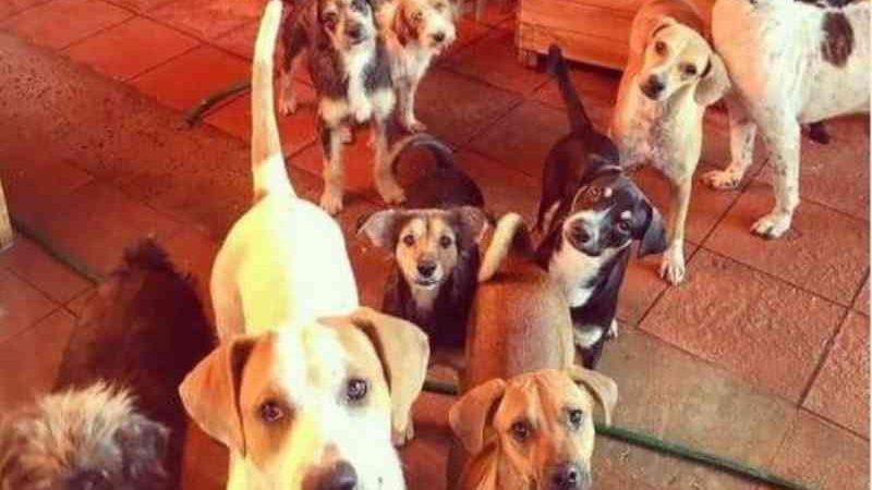 Após anunciar fechamento por dívidas, ONG animal recebe doação de R$ 33 mil