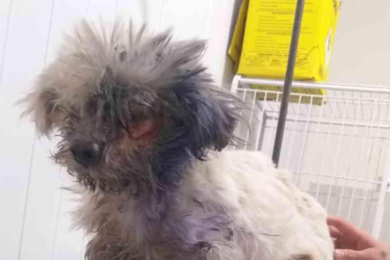Cachorrinho resgatado 'sem olho' não era da idosa que se mudou, diz polícia