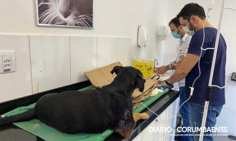 Cão sofre maus-tratos e grupo faz 'vaquinha online' para pagar custos do tratamento