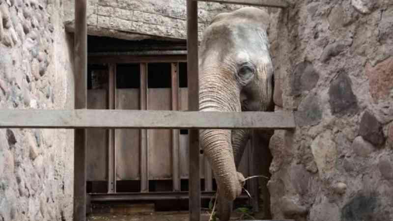 Santuário em Chapada dos Guimarães (MT) deve receber mais dois elefantes no final de abril