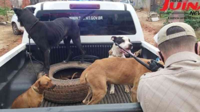 Nove cães abandonados em local com arame energizado são resgatados em Juína, MT; um cão estava morto
